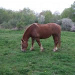 Myrtle in the pasture