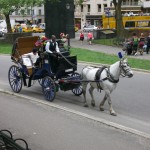 Carriage Horse in Central Park