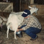 Johnn milking goat