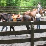Kathy Huggin's Horse Clinic