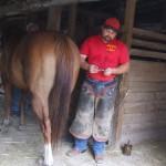 Gene analizing horseshoe angles