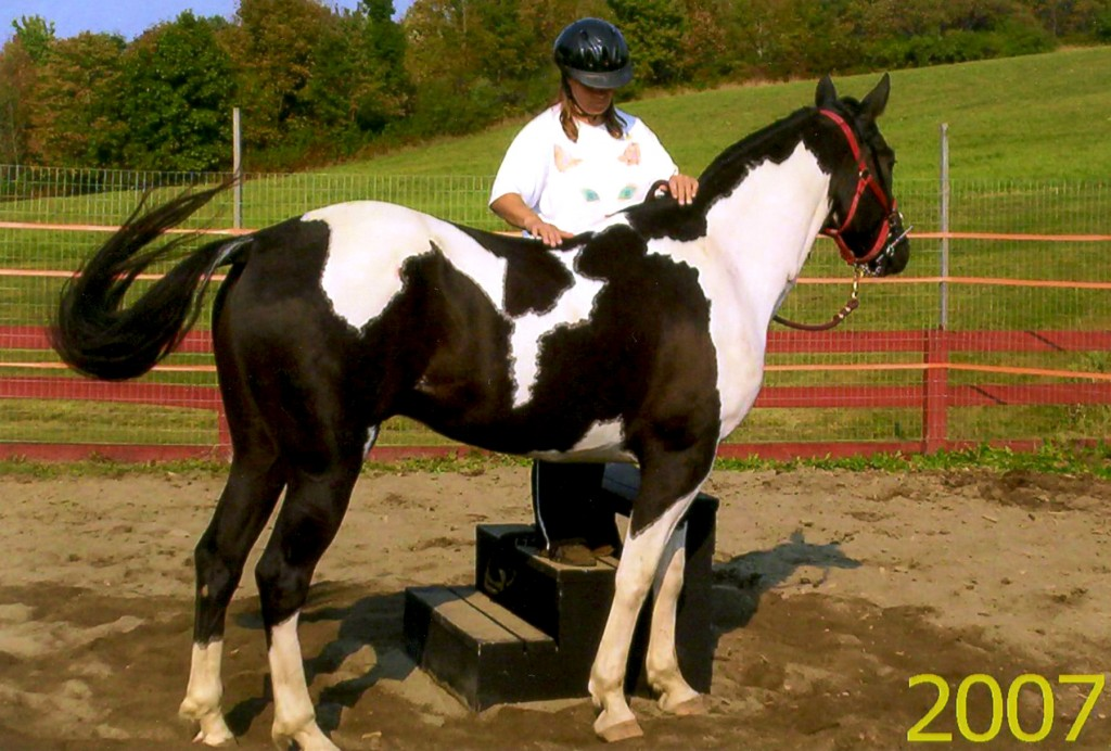 Anne training CJ to accept a rider
