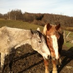 Shadow and Sam - November 2011 - picture by Karen Sykas