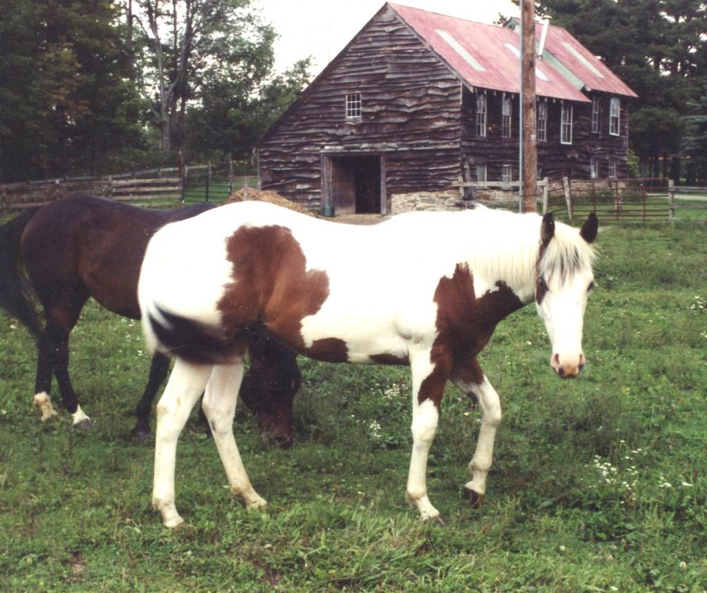 Karen's horse Leo