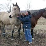 Kim with King and Sen (Quarter Horses)