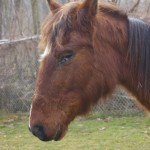 Princess - the brown mare