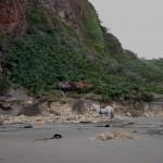 Horses at the beach near Los Senderos de Chepu
