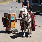 Mini-horse rides
