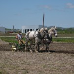Monty Kellogg and his white Percherons Mike and Pat