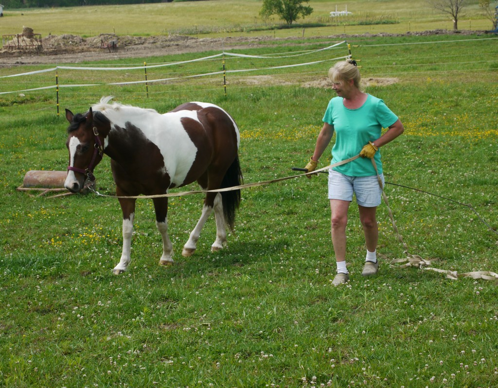 Walking small steps with the horse