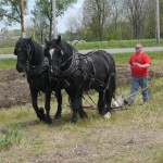 Lester Coit and his team of Percherons