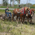 Draft horse team Red and Jeb