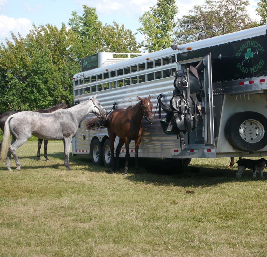 Shamrock team trailer and horses