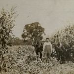 "Millard's Cornfield 1913 ""Great Corn Year of 1913 Murray farm West Athens - courtesy of the Tioga Point Museum"
