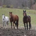 Samson, Freya and Shadow ( right to left)