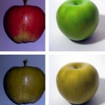 How horse sees colors red and green (photo: Braeburn;Wikipedia 1994 -dichromat)