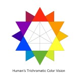 Human Trichromatic Color Vision