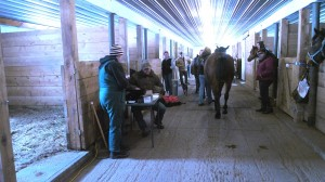 Rising Hope Horse Clinic
