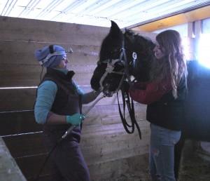 Sasha Kone, Equine Dentist