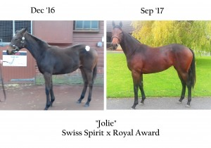 Jolie Dec 16 and Sep 17